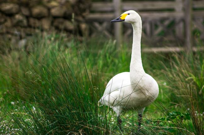 Fler bilder ifrån London Wetlands Centre