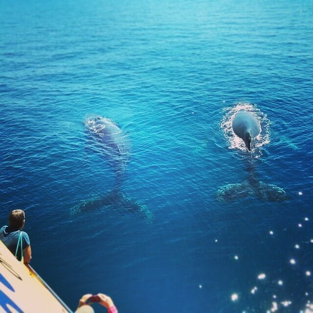 Whale Watching in Hervey Bay: They are massive!