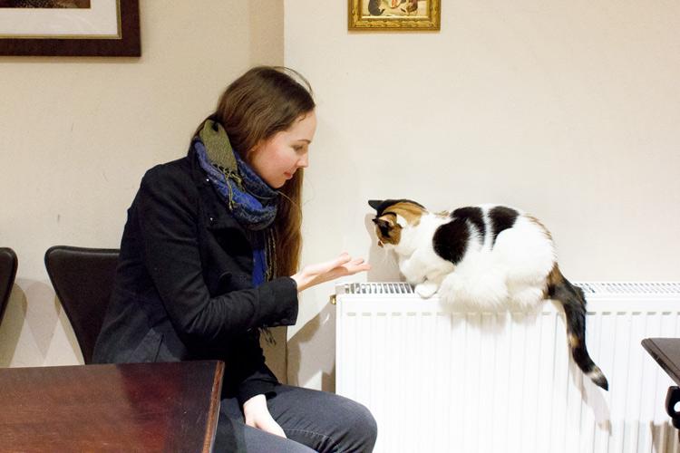 Lady Dinah's Cat Emporium: A purr-fect cat cafe in London?